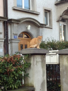 well-fed neighborhood cat