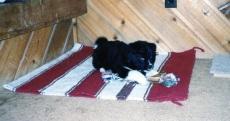 puppycute
