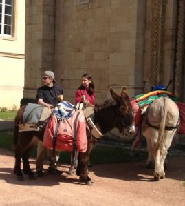 donkeys7