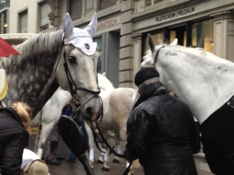 horses in Zurich